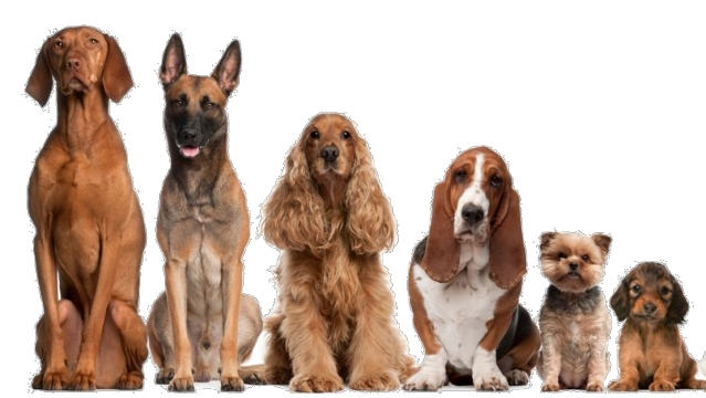 BRAV'OS - Education Canine